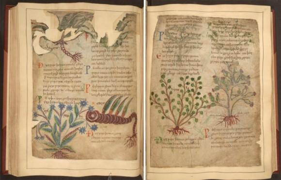 ファンタジー世界のヒーラーを目指す人は必携!千年前の薬草図鑑が無料公開される。ダウンロードもできるぞ!
