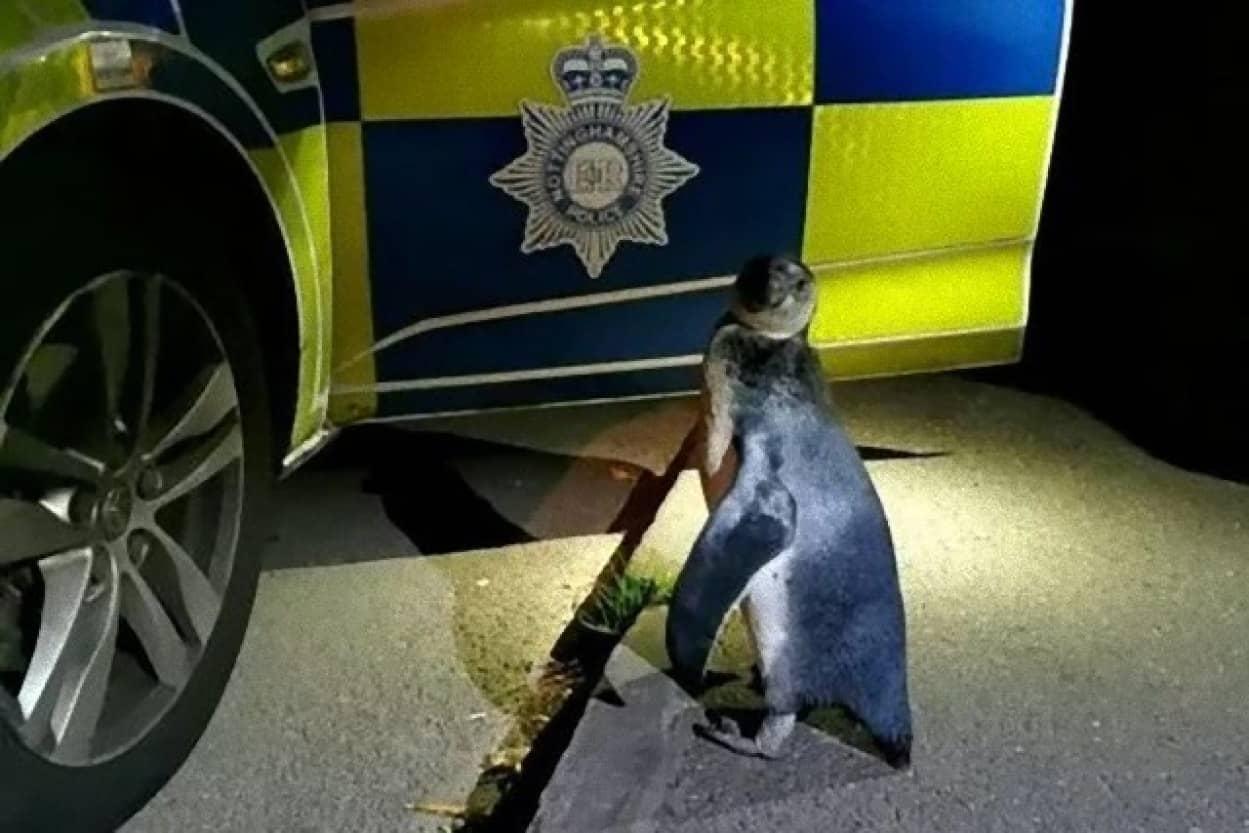 逃亡中のペンギンが警察に保護される事案