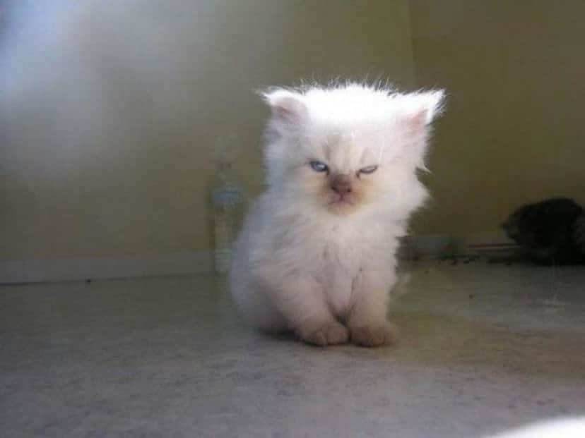 angry-kittens-2-591aec462619a__700_e