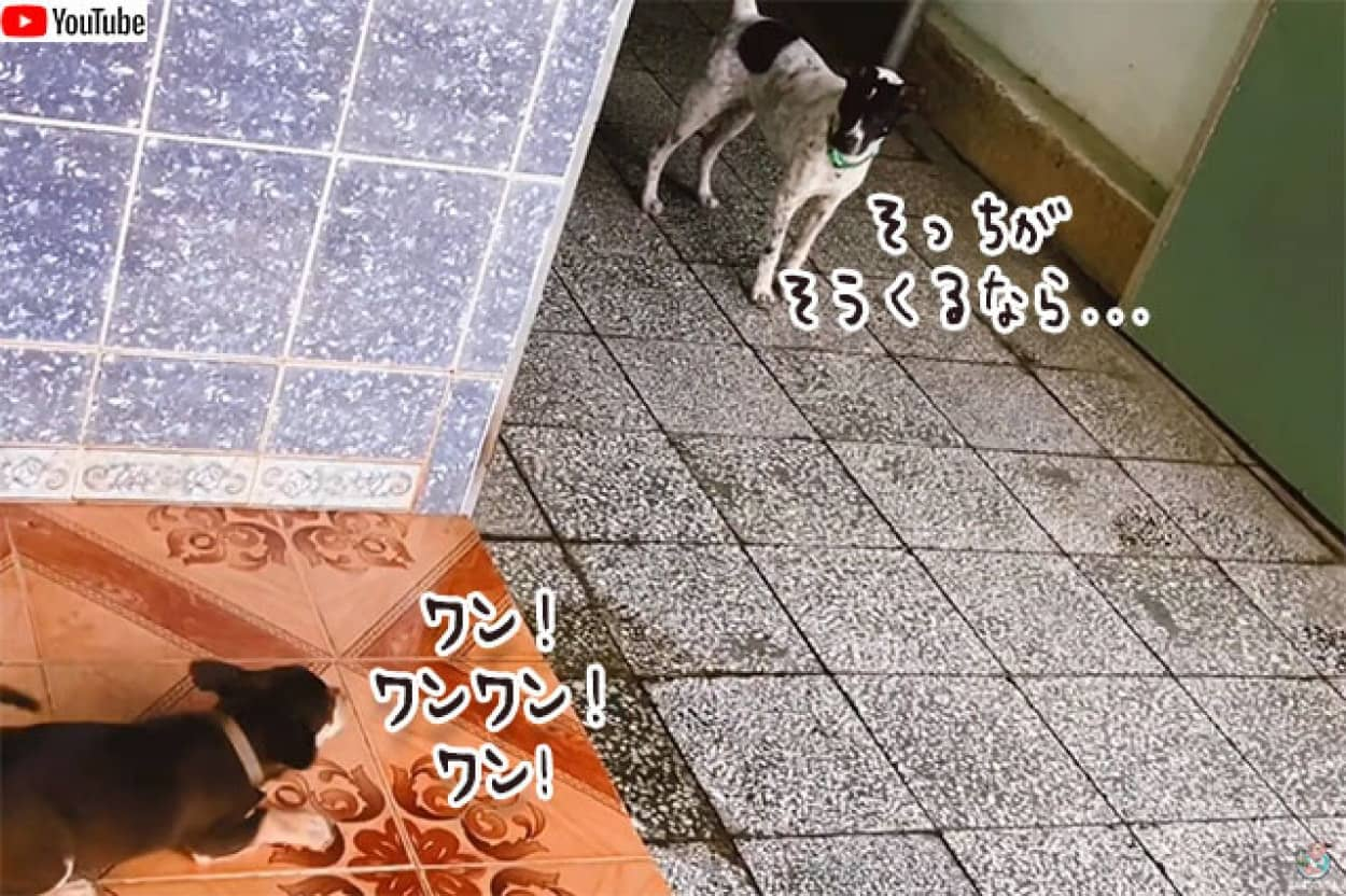 小型犬に吠えられた犬、最強の助っ人を連れてきた