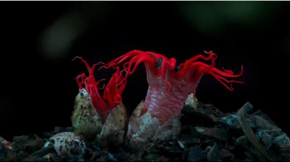 キノコ的ファンタスティック。もわもわするキノコや菌類の微速度撮影