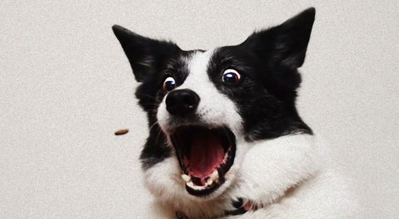 キャッチ キャッチ 口でキャッチ。犬が口でキャッチする瞬間をとらえた面白表情写真
