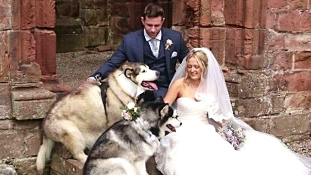 husky-dogs-best-man-maid-of-honor-wedding8a