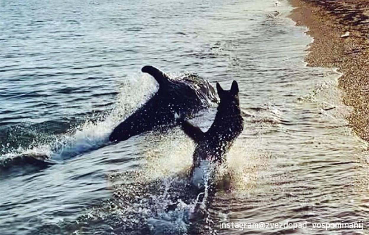 犬と遊びたいイルカが波打ち際まできて一緒に追いかけっこ
