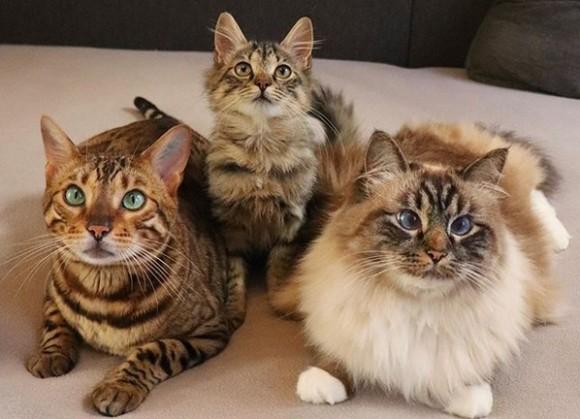 野良猫 子猫 保護