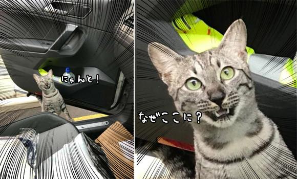 野外パトロール中、ドライブ中の飼い主に偶然出くわした猫。うれしさと驚きが交差しこんな表情に(イギリス)