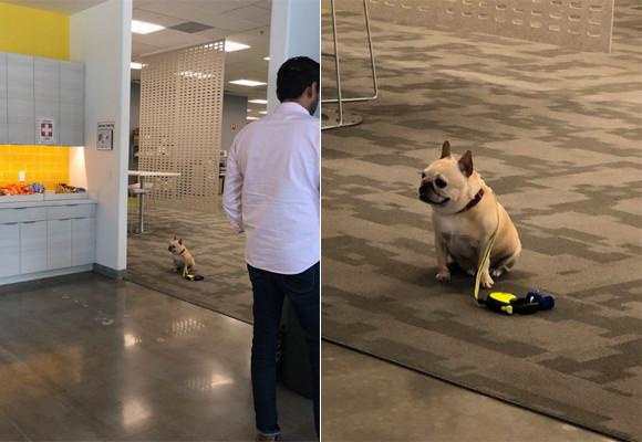 犬入店禁止のカフェの前でお行儀よく飼い主を待ち続ける犬の姿にキュン(アメリカ)
