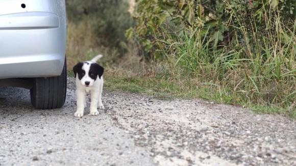 ボクを一緒に連れてって!車の後を必死で追いかけてきた野良犬の保護物語(ギリシャ)
