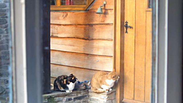 ちりんちりん「中に入れてちょーだいな!」と呼び鈴を鳴らす猫