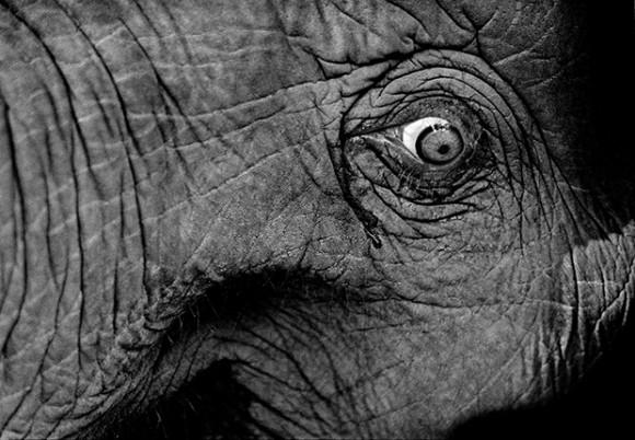 愛されて虐げられる。象と東南ア...