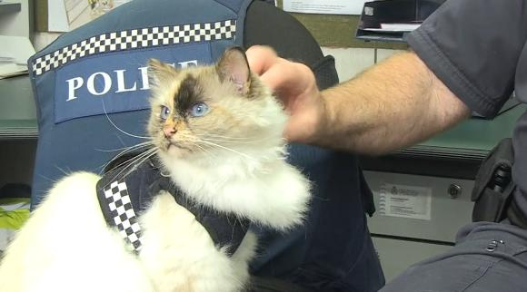 国家権力<猫。ニュージーランドの警察署に自由出勤する猫