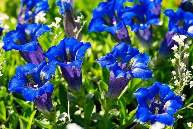 ミツバチが好む青い花