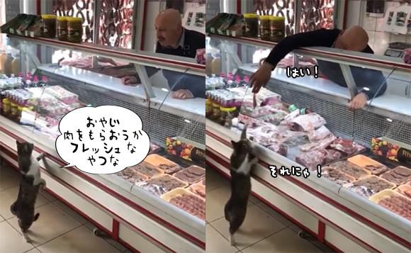 猫が肉屋に買い物に来た?おじさんに注文し肉を受け取る顧客としての猫(トルコ)
