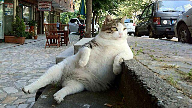 えっとすみません、アナタ猫さんですよね?別の生き物のような座り方をしている猫