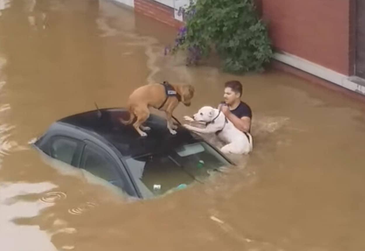 洪水の中2匹の犬を救出したベルギーの住民