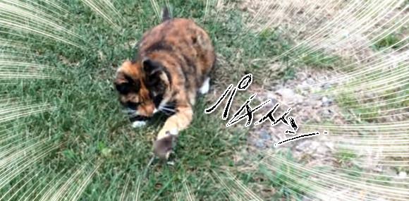 「安心してください、狩りませんから」猫とネズミが仲良く喧嘩する奇跡の光景
