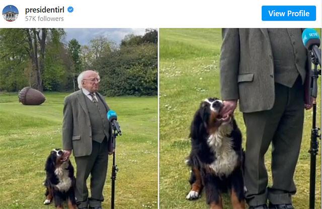 これは甘い放送事故。アイルランド大統領が記者会見中、愛犬が手を甘噛みしまくっている件