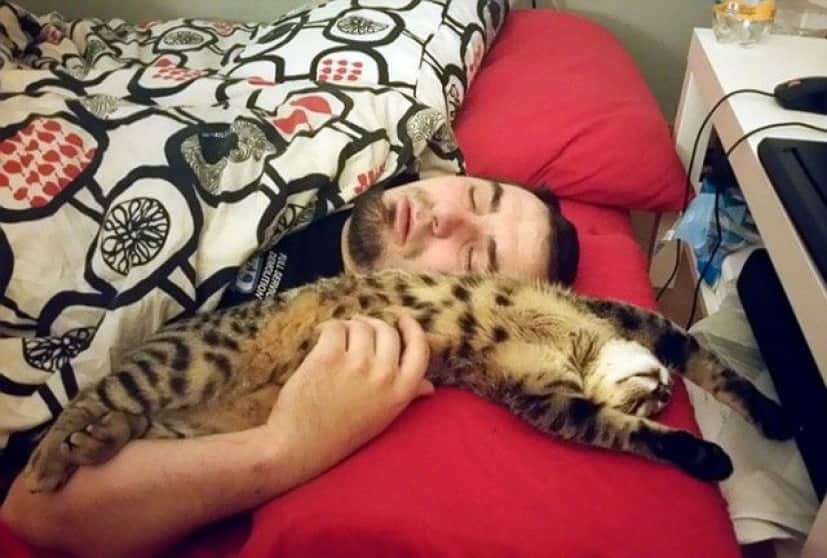 people-who-didnt-want-cats-16_e