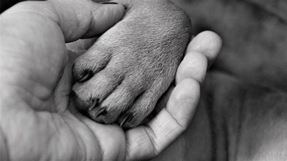 最期にもう一度会わせてあげたい。妻の死の間際、夫はこっそり愛犬を病院に連れて行った