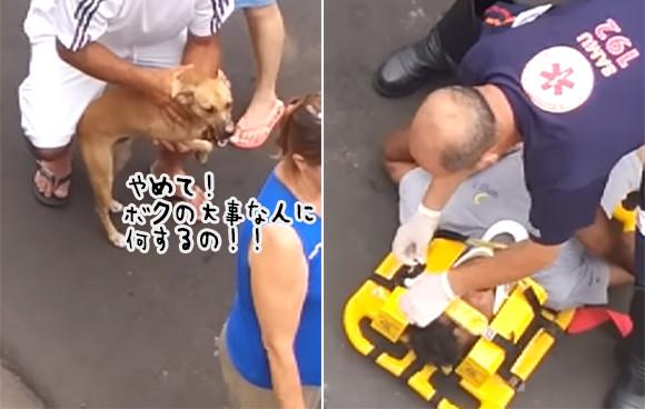 飼い主が救急車で搬送される瞬間。こらえきれなくなった愛犬が飼い主に駆け寄りその体を必死に守ろうとする
