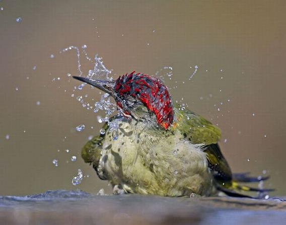 beautiful_photographs_of_birds_22