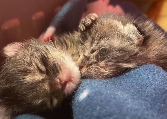 ぎゅっと身を寄せ合って寒さをしのいでいた2匹の子猫、きょうだいたちが息絶える中、奇跡的に生き延びる(アメリカ)