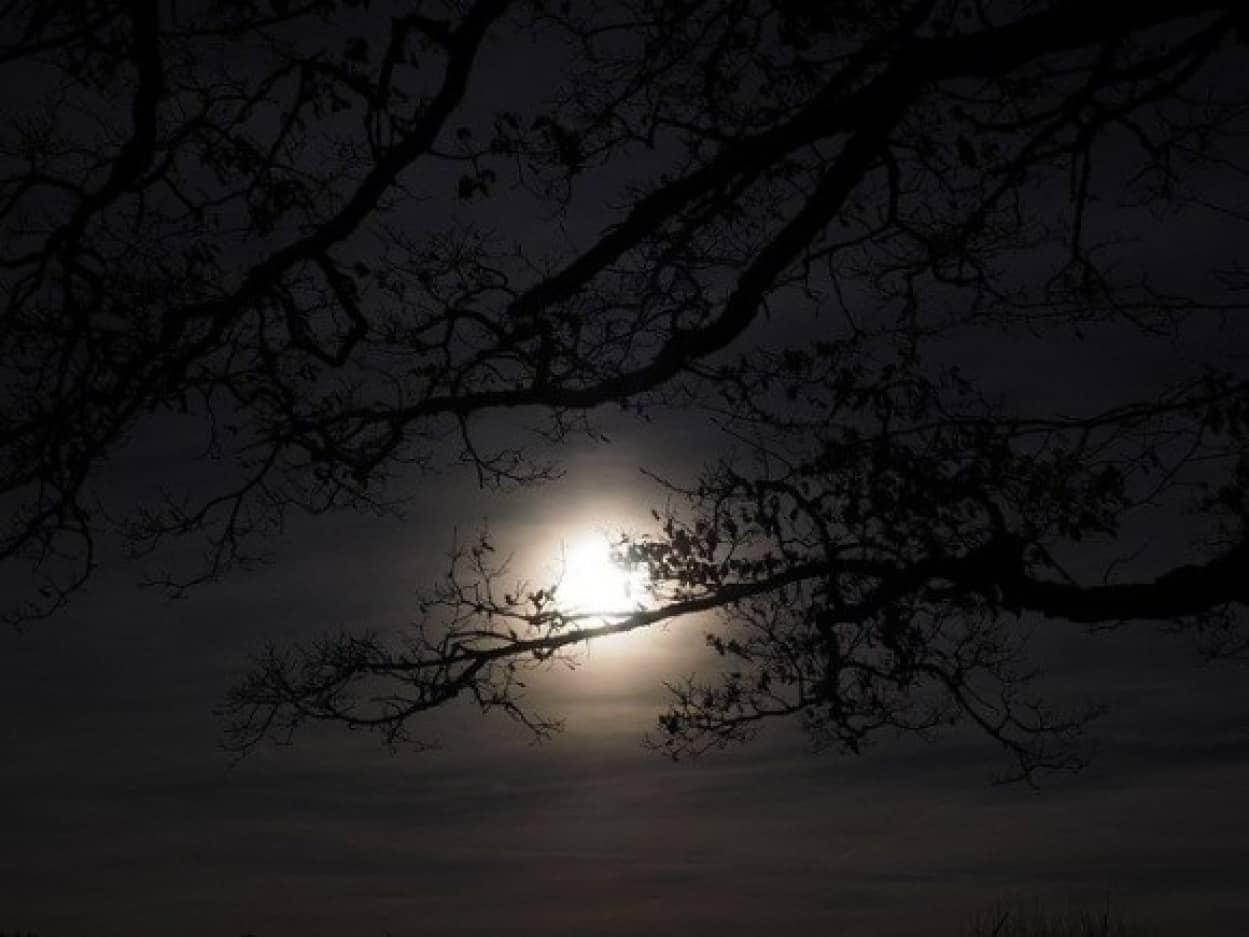 超常現象捜査官が森の中で幽霊映像を入手