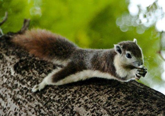 3body_finlaysons_squirrel_e