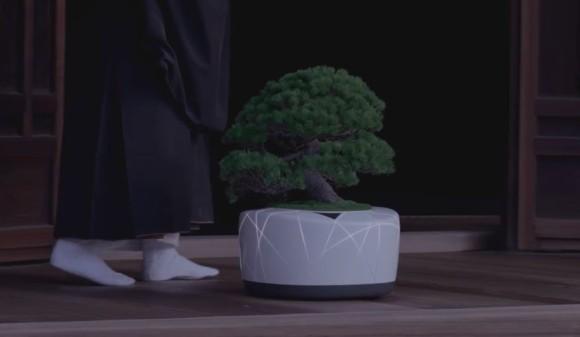 bonsai3_e