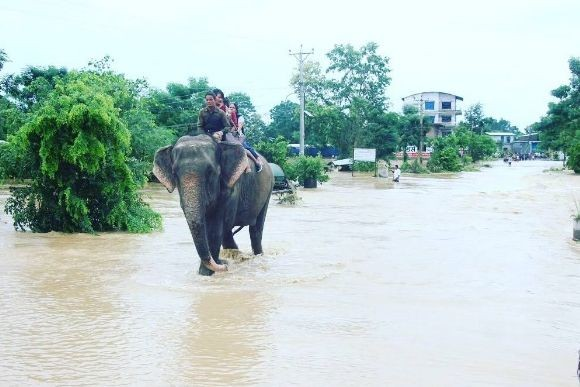 ゾウが人々の命を救う。洪水で孤立した町の人々を救ったゾウのレスキュー隊 (ネパール)