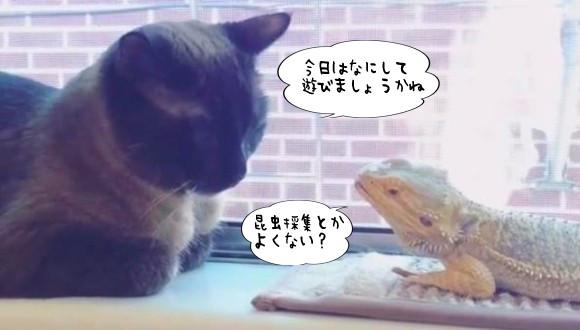 同じ悲しみを経験してきたから。会った瞬間に意気投合した猫とトカゲの無敵ライフ