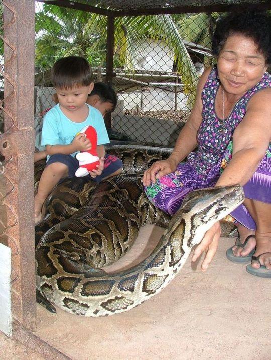giant_pet_snake_05