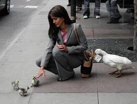 a97299_g187_2-duck