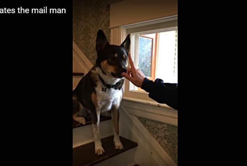doghatesmailman3