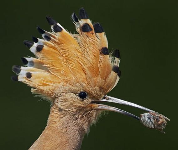 beautiful_photographs_of_birds_17