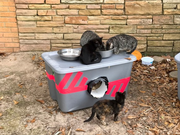 古い収納ケースで猫の家を作るボーイスカウトの活動