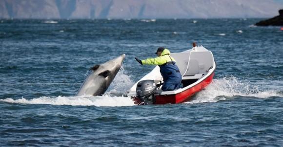 ロックダウン中、人間と遊べず孤独な思いをしているイルカを毎日励ましに行く漁師たち(アイルランド)
