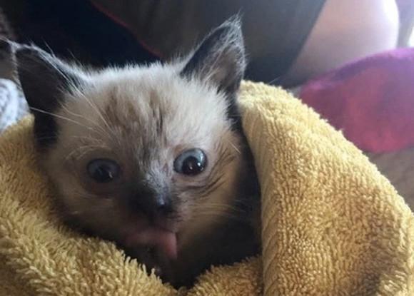 人間を親友認定した野良猫の母さん。出産後、我が子の異変に気が付きその人間に助けを求める。