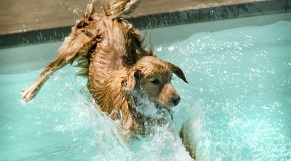 水中での呼吸が可能となる「液体呼吸」実現に向けて犬・ネズミ・ハムスターによる訓練が開始される(ロシア)