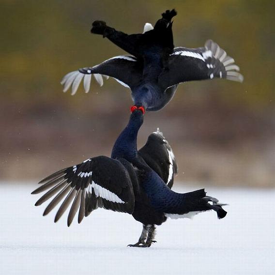 beautiful_photographs_of_birds_13