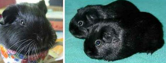 黒の誘惑、レアキャラ確定黒変種、ブラッキーな10の動物たち