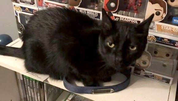 大親友だった犬の亡き後、悲しみに暮れていた猫。 親友の残した首輪を発見し、ニオイを嗅ぎスリスリと頭をこすりつける