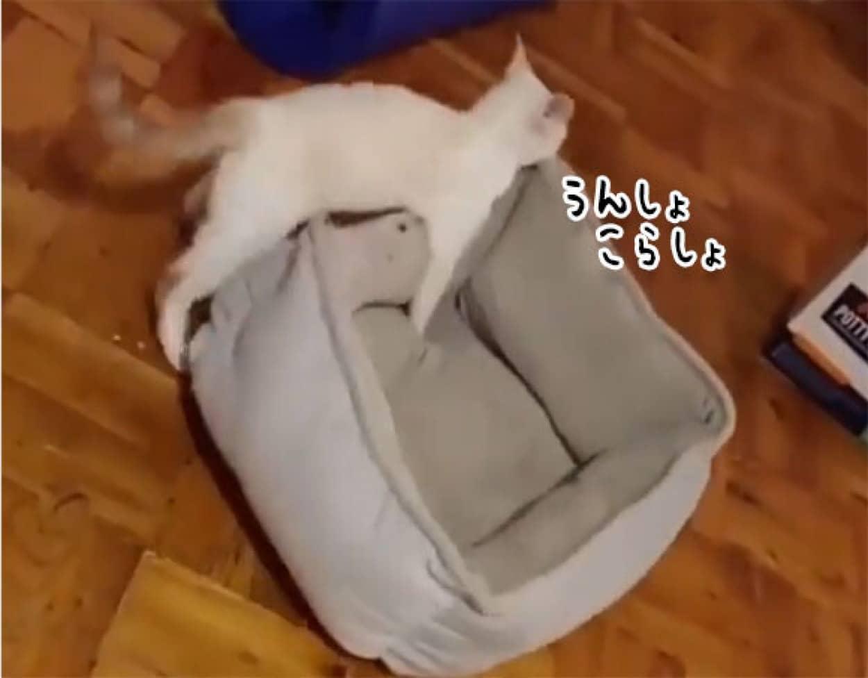 ベッドを運ぶ猫、その行先は?