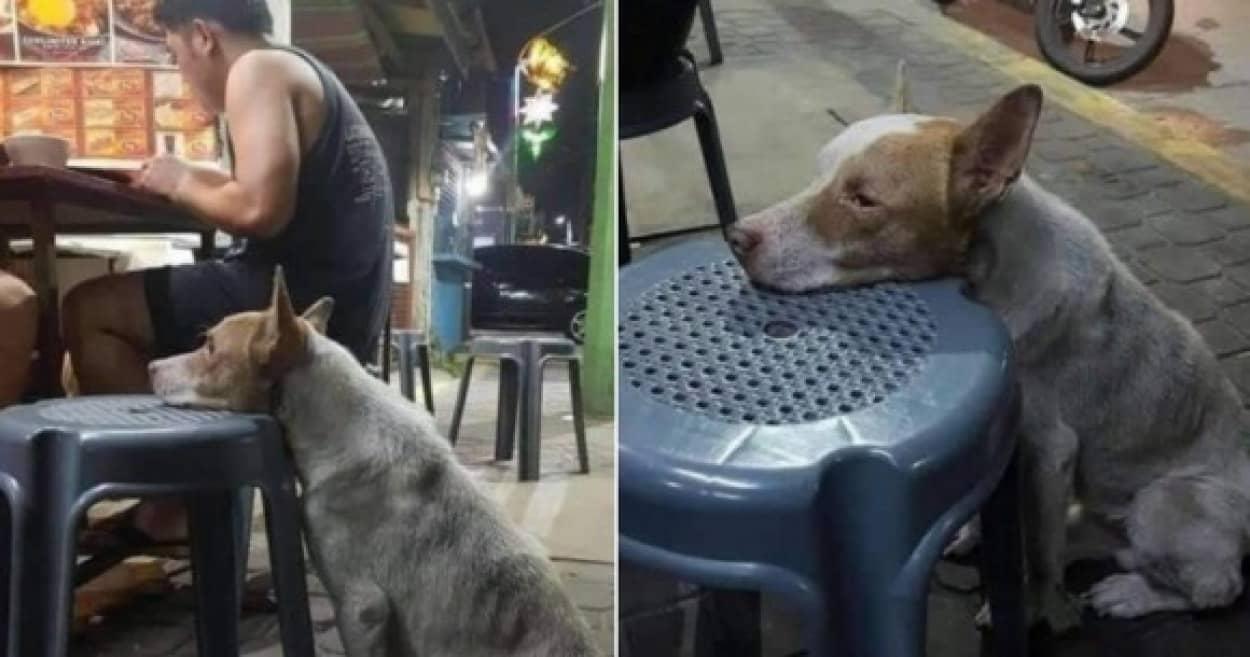 空腹に耐えきれなくなった犬が屋台の椅子に顔を乗せ食べ物をもらえるのを待ち続けるcover_e