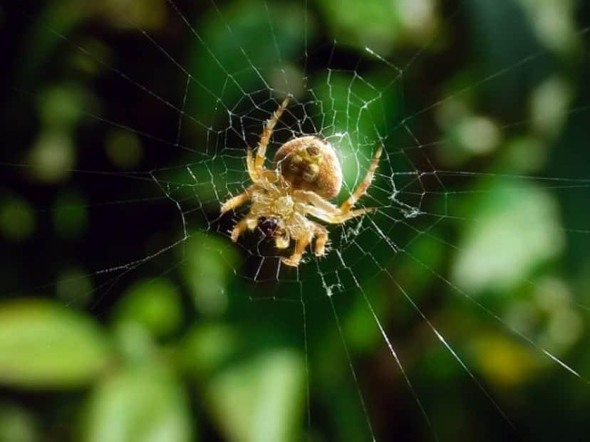 hairy-field-spider-884463_640_e