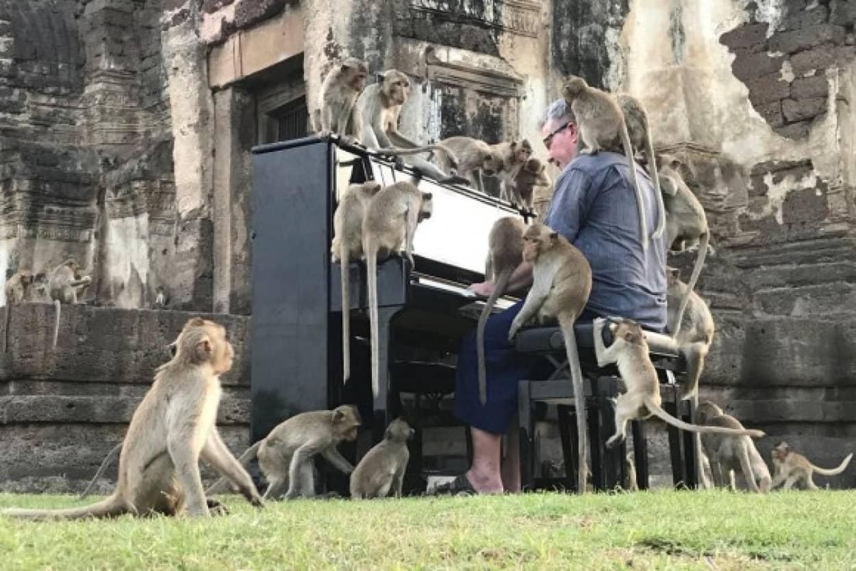 飢えた猿の為にピアノ演奏