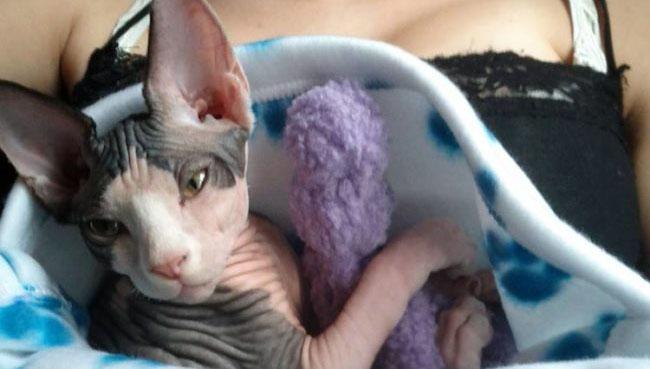 モフモフなしでも猫はかわいいのだ。スフィンクス・キャットの魅力を堪能しようの会