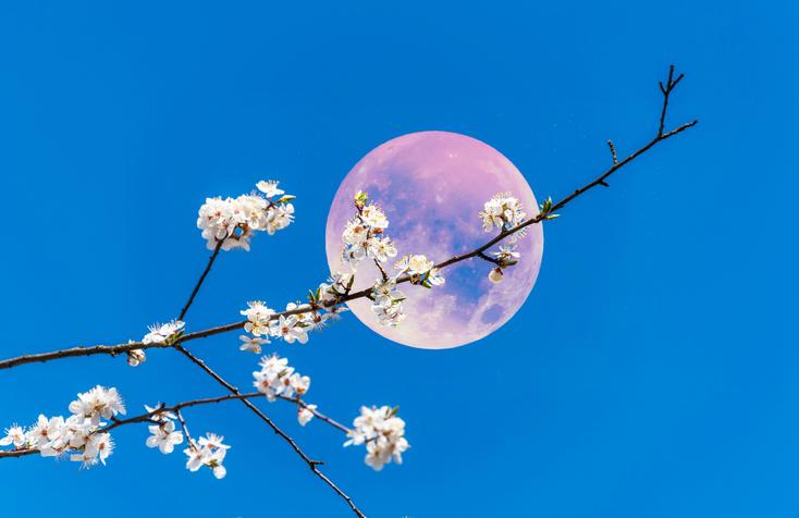 本日は満月。ピンク色じゃないけど幸運を運ぶと言われているピンクムーンが到来