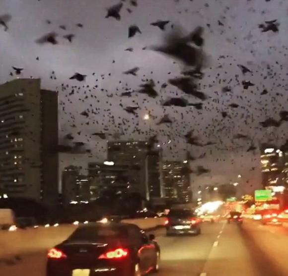 リアルはヒッチコックの映画を凌駕してるっぽい。大群の黒い鳥に襲来された高速道路(アメリカ)