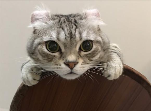 2月22日は猫の日。世界の猫に関する20のトリビア